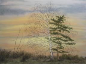 Bäume im Sonnenuntergang