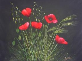 Sommergräser - Klatschmohn