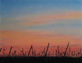 Weingarten im Abendlicht